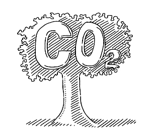 Carbon dioxide released by trees at night