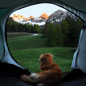 Keeping-Dog-Inside-The-Tent