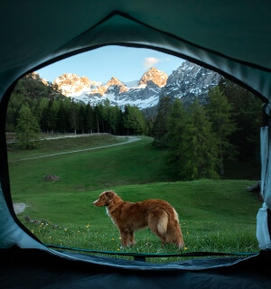 Keeping-Dog-Outside-The-Tent