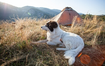 Separate-Tent-For-Your-Dog