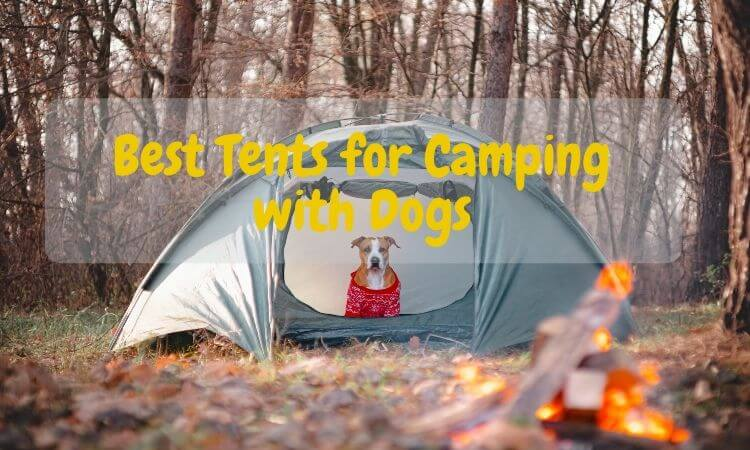 best-tents-for-camping-with-dogs
