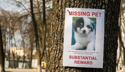 Don't-Offer-A-Reward-For-Finding-The-Dog