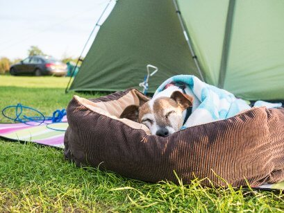buy-sleeping-bag-or-sleeping-pad-for-dogs