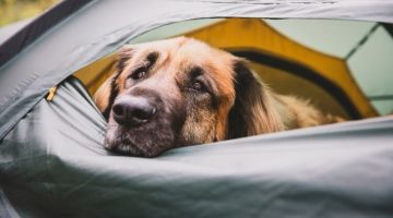 eaving-your-dog-alone-in-the-tent-while-camping
