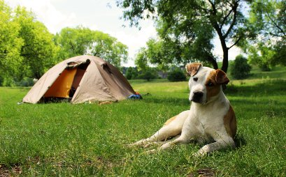 some-campgrounds-require-an-extra-cost-for-dogs