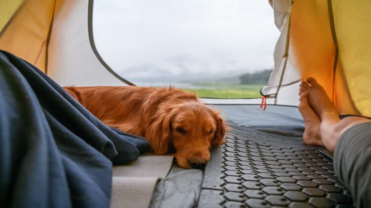 How-to-train-dog-sleep-in-tent