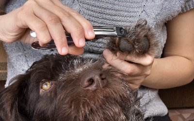 clip-the-dogs-nail
