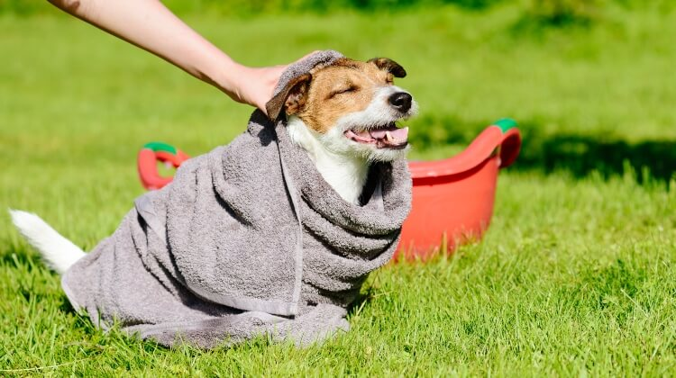 dry-wet-dog-when-camping